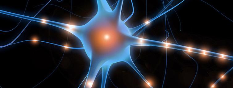 plasticita-neuronale